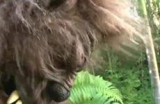 Gelaarsd sexy stoeipoesje pijpt de grote boze wolf