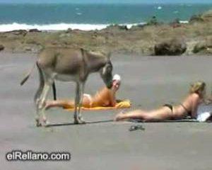 Hengstige ezel laat beach babe duidelijk merken hoe leuk hij haar vind